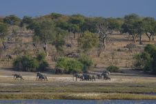 Free African Elephant Herd Royalty Free Stock Images - 17590359
