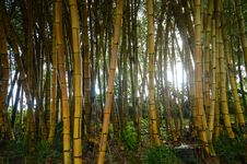 Free Bamboo Stock Images - 17592014