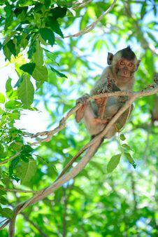 Baby Monkey Royalty Free Stock Photography