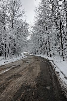 Free Winter Road Through Frozen Forest Royalty Free Stock Photo - 17597845