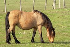 Horse On The Farm Royalty Free Stock Photo