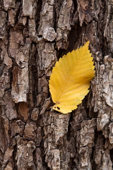 Free Yellow Leaves On The Tree Royalty Free Stock Photography - 17598137