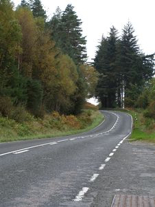 Empty Forrest Road Royalty Free Stock Photos