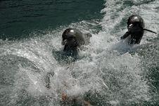 Free After Splash Stock Image - 1762901