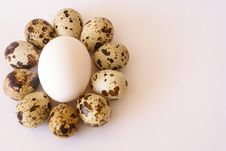 Free Eggs Composition Royalty Free Stock Photography - 1763707