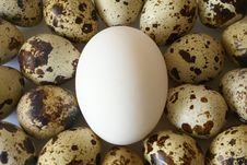 Free Eggs Close-up Royalty Free Stock Photos - 1763768