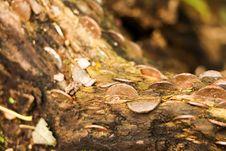 Free Money Log Stock Image - 1765531