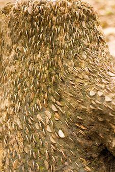 Free Money Log Stock Image - 1765591