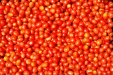 Free Baby Tomatoes Stock Photography - 1766052
