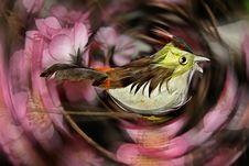 Free Birdie Stock Photo - 1767590