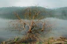 Free Surreal Tree Stock Photos - 1767623