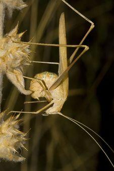 Free Brown Grasshopper Royalty Free Stock Photos - 1768068