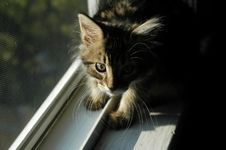 Free Kitten In Window Stock Photo - 1768900