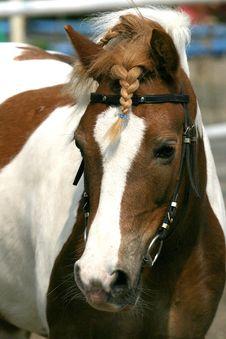 Free Horse Portrait Stock Image - 1768911
