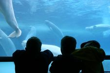 Free Three Boys At An Aquarium Royalty Free Stock Photos - 1769168