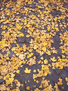 Free Autumn Royalty Free Stock Image - 1769476