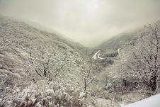 Free Winter Royalty Free Stock Photography - 17600237