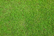 Free Green Grass Stock Image - 17600331