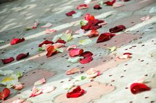 Free Petals Of Roses Scattered On A Floor Stock Images - 17604064