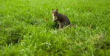 Free Squirrel Royalty Free Stock Image - 17604226