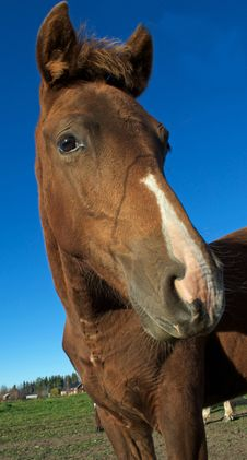Free Horse Stock Images - 17605334
