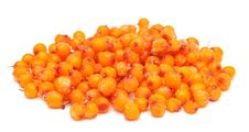 Free Frozen Sea Buckthorn Stock Photo - 17605360