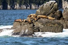 Free Sea Lions Basking In The Sun Royalty Free Stock Photography - 17606007