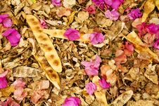 Free Collection Of Dried Leaves And Blooms Royalty Free Stock Image - 17606146