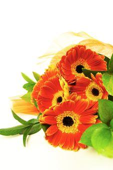 Free Gerbera  Bouquet Stock Image - 17606941