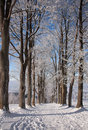 Free Winter Trees Stock Images - 17618914