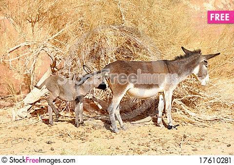 Donkey and baby donkey Stock Photo