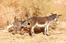 Free Donkey And Baby Donkey Stock Image - 17610281