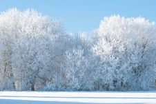 Free Frozen Trees On The Field Stock Photo - 17613180