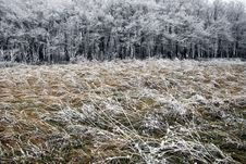Free Hoarfrost On A Grass, Blowing Wind. Stock Photography - 17613882