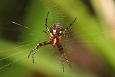 Free Spider And Net Stock Photography - 17618362