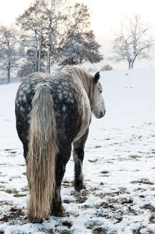 Free Dapple Horse Royalty Free Stock Photos - 17618948