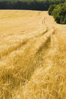 Free Agriculture Farmland Field Landscape Stock Image - 17622801