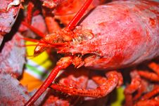 Free Cooked Lobster Up-close Stock Photos - 17623383