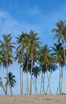 Free Coconut Trees Royalty Free Stock Photos - 17624408