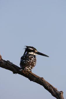 Free Kingfisher Stock Photo - 17626140