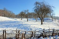 Free Long Shadows On Winter Orchard Royalty Free Stock Photography - 17626607