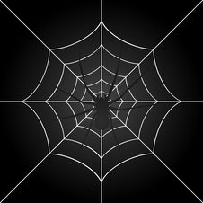 Free Spider Stock Image - 17628221