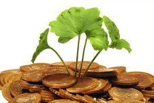 Free Plant Makes The Way Through A Heap Of Coins Royalty Free Stock Photography - 17628747