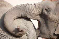 Free Elephants Royalty Free Stock Photography - 17628827