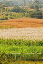 Free Farm In Northeast Thailand Royalty Free Stock Image - 17634236