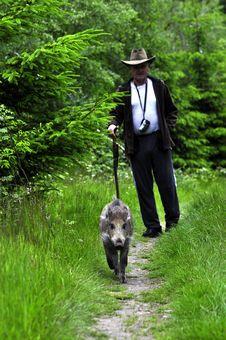Free Man And A Wild Pig Stock Photos - 17630583