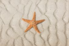 Free Starfish On A Tropical Beach Stock Photography - 17632872