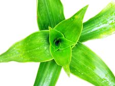 Free Green Foliage And Water Drop Stock Photo - 17633570