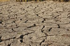 The Drought In The Field Stock Photos