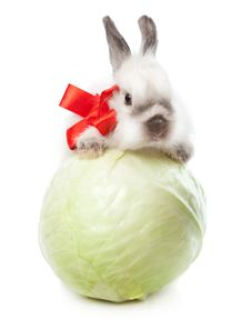 Free A Rabbit With A Cabbage Royalty Free Stock Photo - 17634875